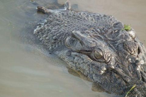croc ep5